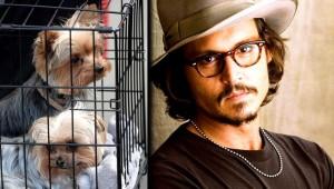 Johnny-Depp-2013